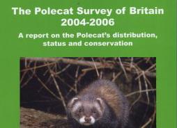 Polecat 2004-06Cropper