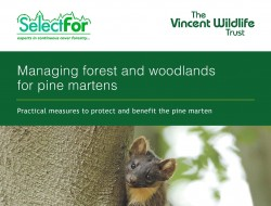 Pine Martens and Forest Management Leaflet _Page_1