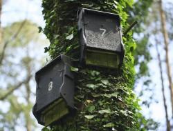1FFs in Portumna Forest Park