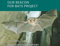 OB4B report cover